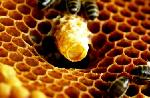 How Royal Jelly is Made